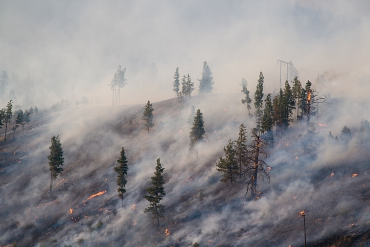 Forest fire burning in central Oregon in the smoky season